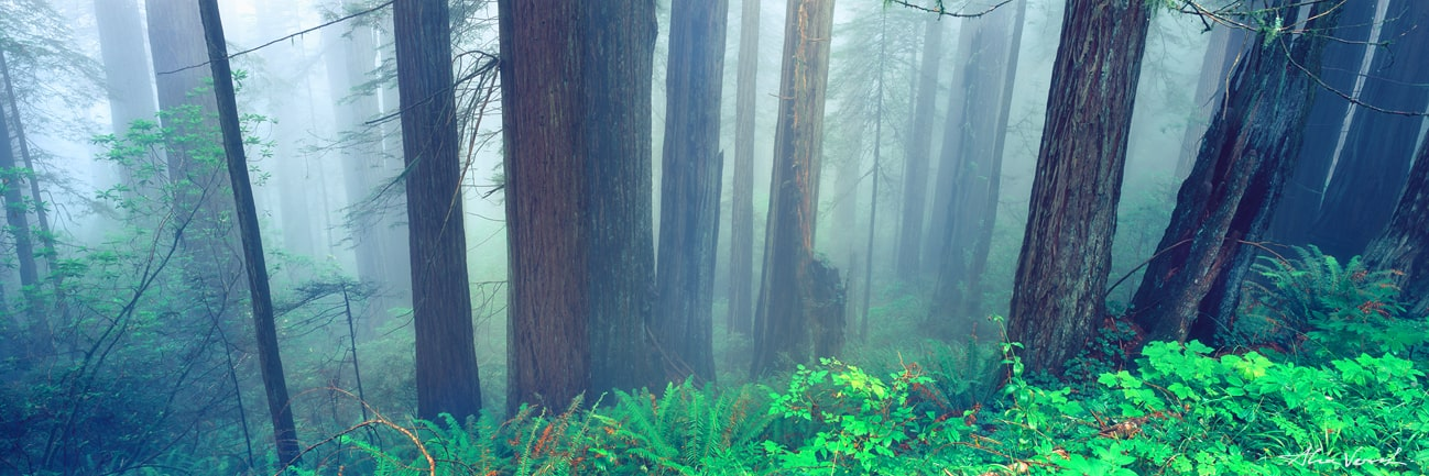 American rainforest, Olympic National Park Photo, Washington state Photography, Alexander Vershinin, luxury photo