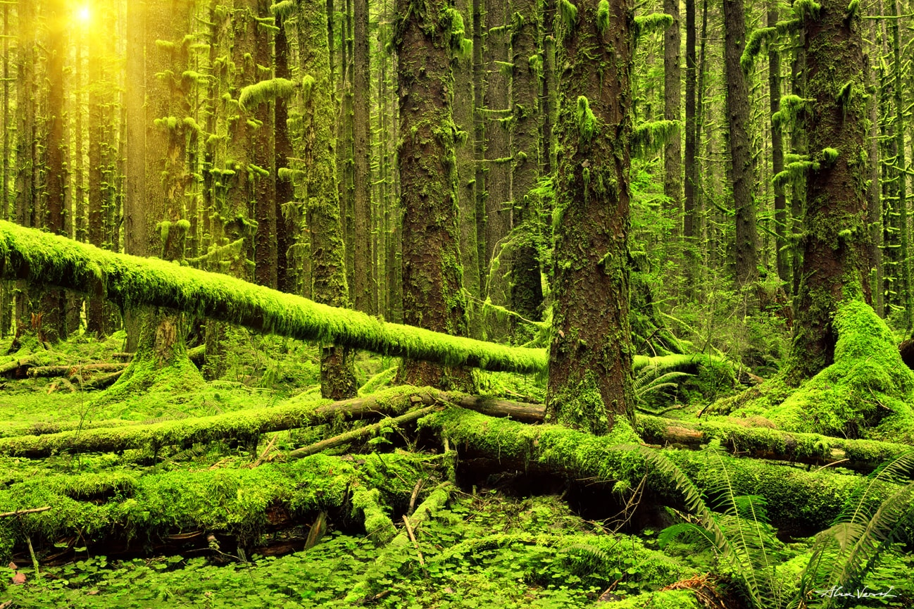US rainforest pictures, Luxury Fine Art, Large Format Prints, Panoramic Photos, Nature Photography, Washington state photography