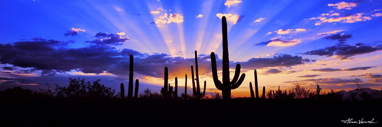 Cactus, Saguaro National Park Photo, Arizona Photography, Alexander Vershinin, luxury photo