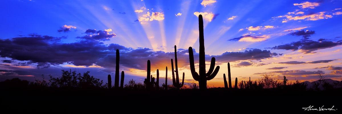 Limited edtion, Fine Art, True Arizona, Arizona Photography, Alexander Vershinin, Saguaro National Park, cactus, sun beam, Arizona flag, photo