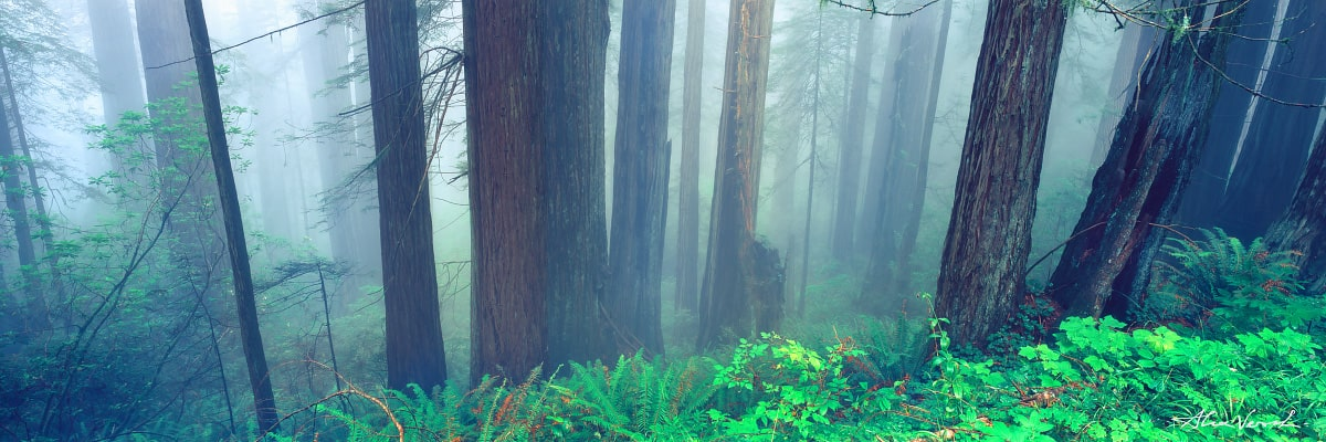 Limited edtion, Fine Art, Washington Landscape Photography, Words Of Silence, Alexander Vershinin, misty forest, fog wood, trees, Olympus, photo